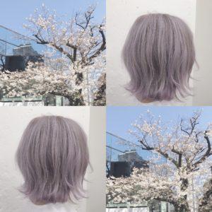 ホワイトピンクヘアー 桜
